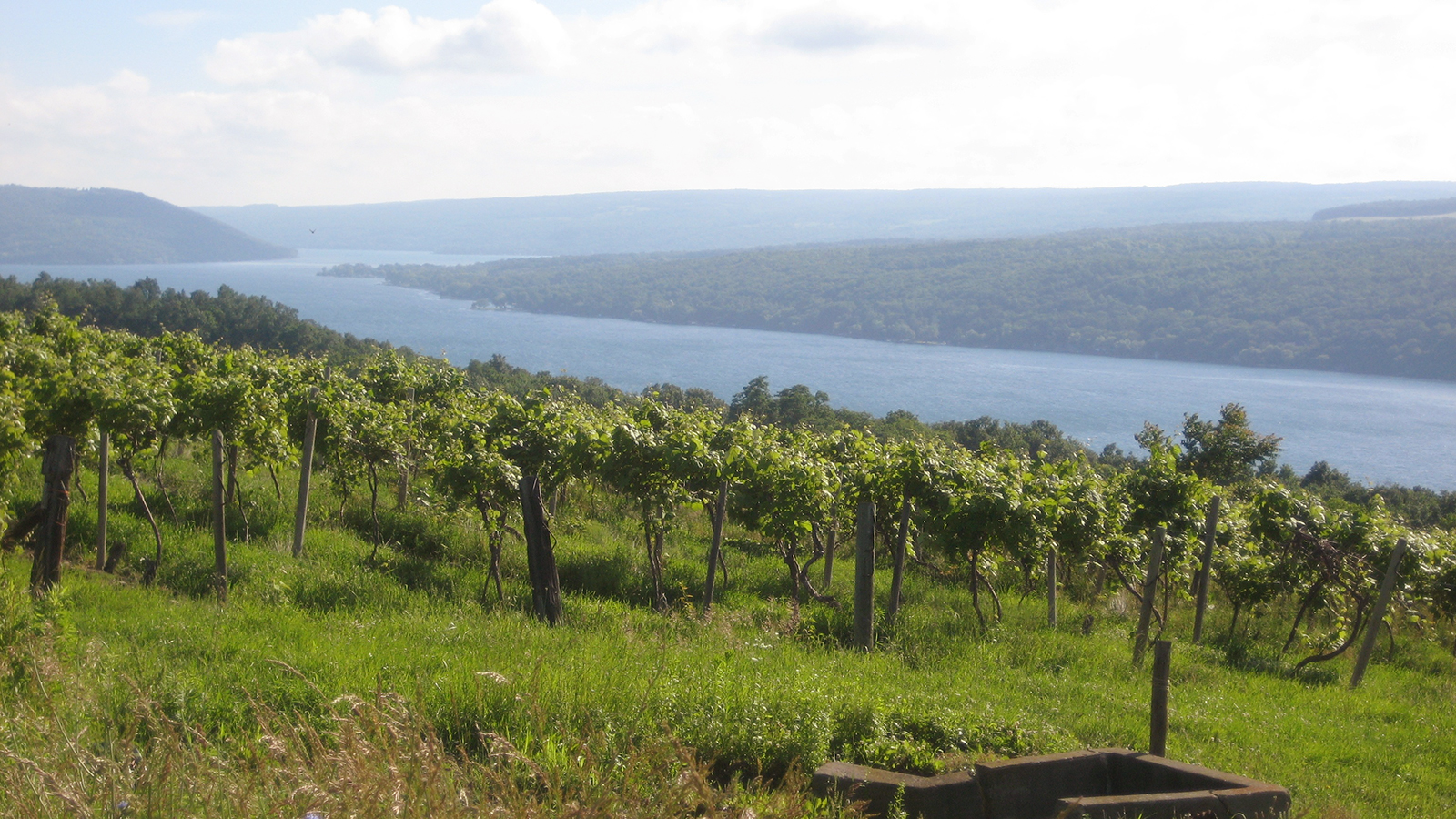 Little steps at the finger lakes 39 keuka lake vineyards for Finger lakes fishing report